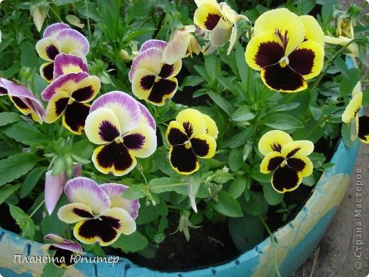 Цветы моего двора фото 20