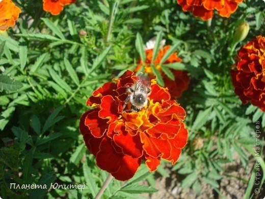 Цветы моего двора фото 24