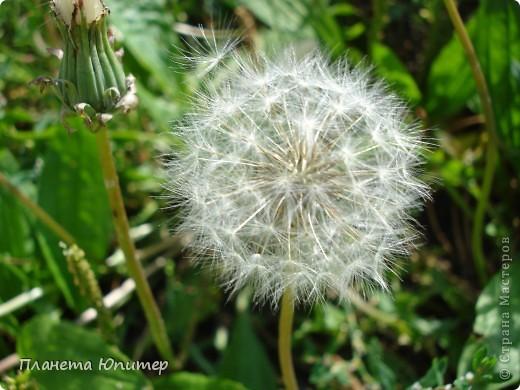 Цветы моего двора фото 26