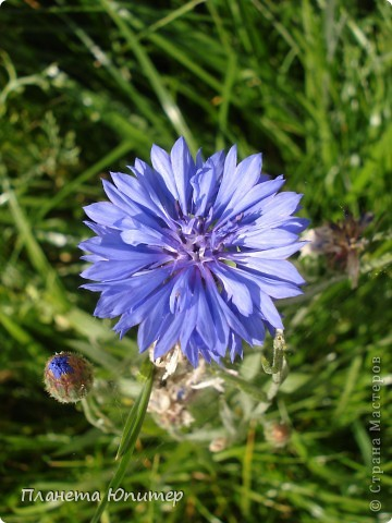 Цветы моего двора фото 28
