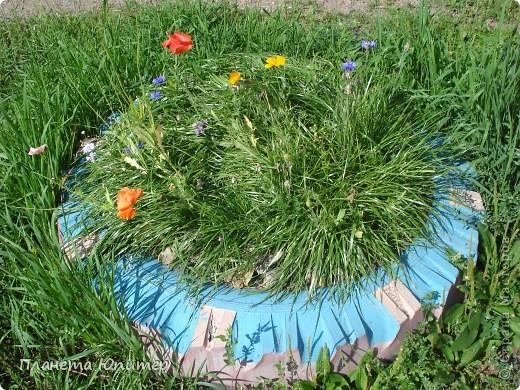 Цветы моего двора фото 29