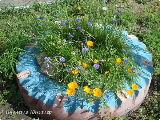 Цветы моего двора фото 30