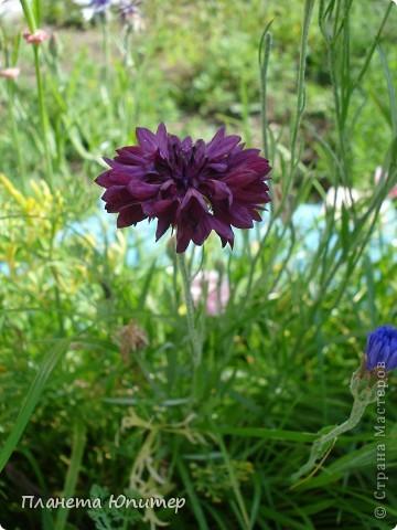 Цветы моего двора фото 32
