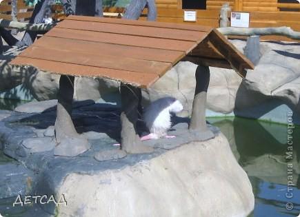 Анапа - республика  детства Вот так встретил нас город-курорт фото 4
