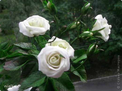 Кустовая роза фото 3