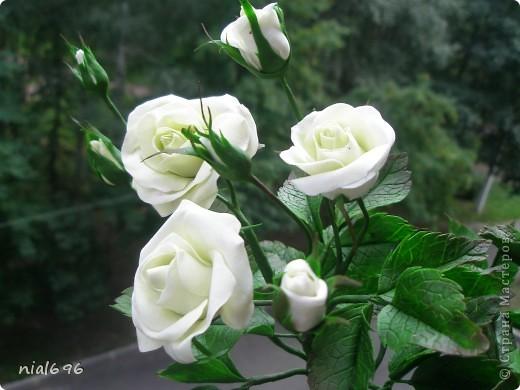 Кустовая роза фото 4