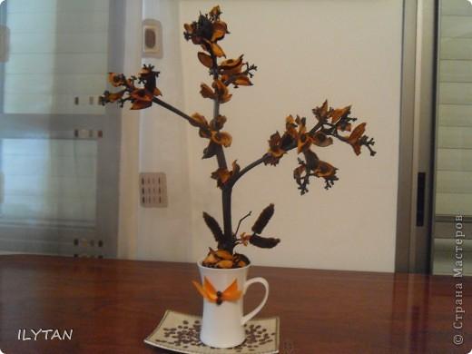 Оранжевая  импровизация фото 1