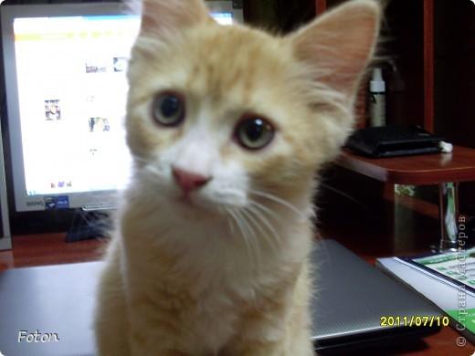 Всем привет! Сегодня просто день кошек в СМ. Вот и я решила похвастаться своим любимчиком. И так знакомьтесь, Масик, Масевич, Масяня и т д, откликается на любой вариант, кроме Кис-кис. фото 4