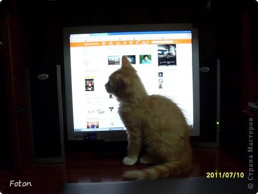 Всем привет! Сегодня просто день кошек в СМ. Вот и я решила похвастаться своим любимчиком. И так знакомьтесь, Масик, Масевич, Масяня и т д, откликается на любой вариант, кроме Кис-кис. фото 5