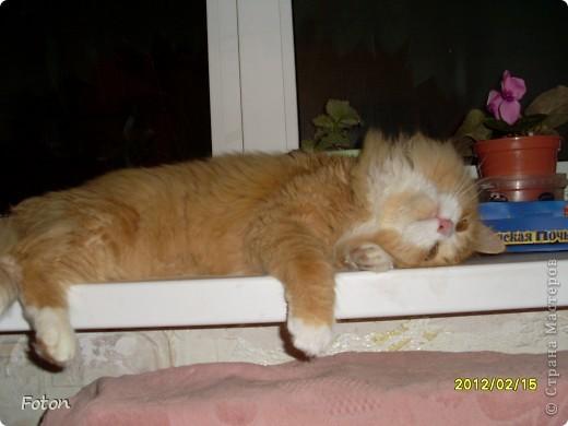 Всем привет! Сегодня просто день кошек в СМ. Вот и я решила похвастаться своим любимчиком. И так знакомьтесь, Масик, Масевич, Масяня и т д, откликается на любой вариант, кроме Кис-кис. фото 7