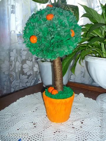 Моё первое дерево,очень хотелось именно мандариновое. фото 2