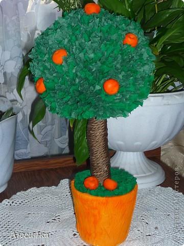 Моё первое дерево,очень хотелось именно мандариновое. фото 1