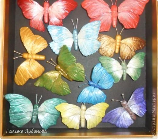 Бабочки-красавицы. фото 3