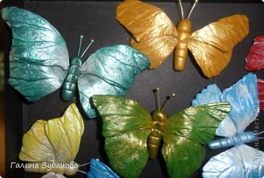 Бабочки-красавицы. фото 2