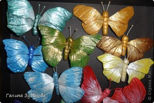 Бабочки-красавицы. фото 1