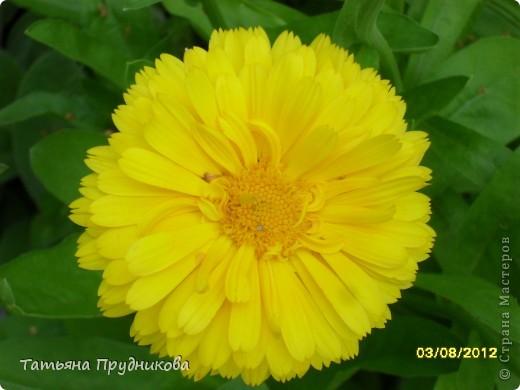 Бабочка будто специально позировала, ходила туда-сюда, дождалась, пока я за фотоаппаратом схожу.  фото 16