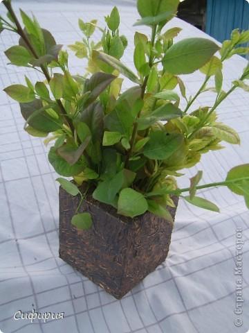 Привет-привет!!! Решила сотворить вот такую вазочку для сухоцвета! Сухоцветы сейчас сохнут, поэтому пока поставила молодые грушевые веточки, уж больно мне понравился ярко-зеленый цвет! фото 3