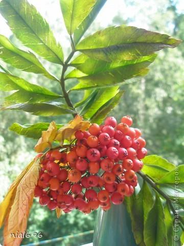 Скоро осень.. фото 1