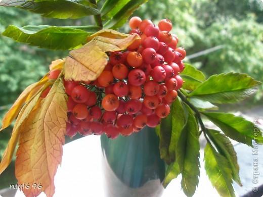 Скоро осень.. фото 2