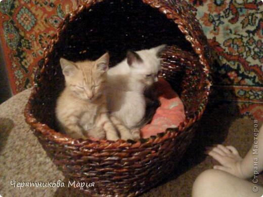 корзина для кошки  фото 1