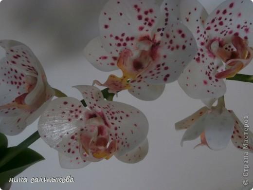 Всем привет! Закончила орхидейку и сакуру для магазина. В заказе не была загнана в рамки, лепила по своему усмотрению- к чему очень рада))) фото 2