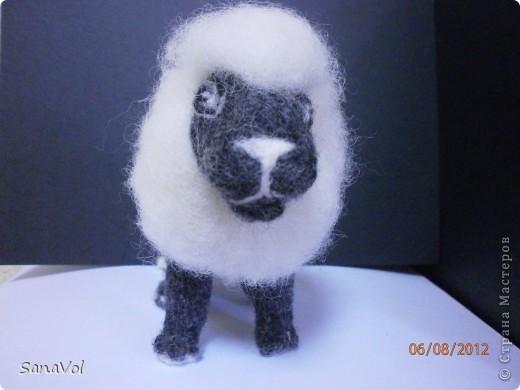 Лев Соломон свалян из овечьей шерсти методом сухого валяния фото 5