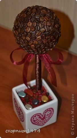мое первое кофейное дерево фото 2