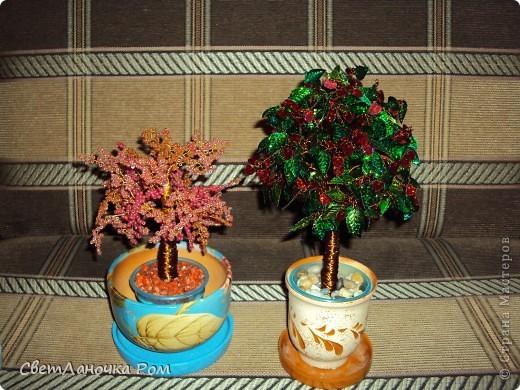 Деревья  фото 6