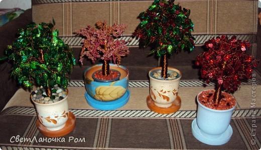 Деревья  фото 7