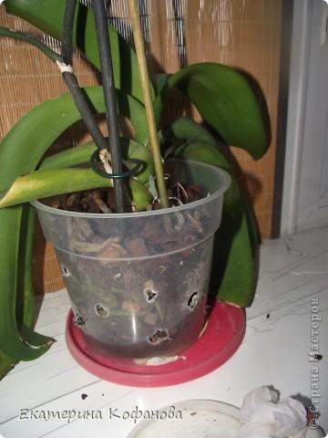 """Мне давно приглянулся цветок - орхидея. На данный момент их очень легко купить и уход за ними не составляет особых усилий, но каждый у кого есть орхидея знает об ее не очень красивой стороне - пластиковый горшок. Красота и стойкость этого цветка поражают , но """"прострелянный """" горшок портит вид. В магазинах продают красивые стеклянные горшки, некоторые выращивают орхидеи в них, но у меня как - то не сложилось со стеклом. От туда плохо испаряется влага и корни гниют. Негативный опыт вернул меня к пластику. фото 2"""