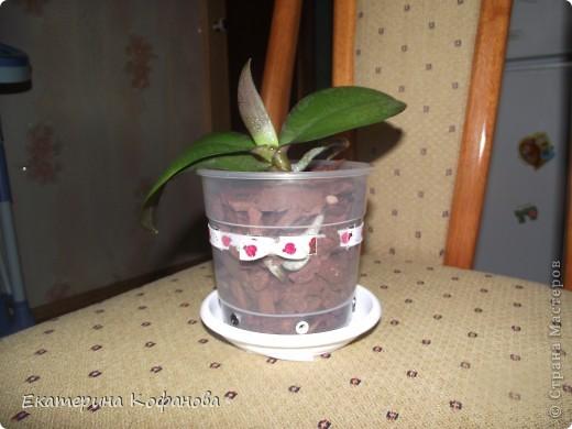 """Мне давно приглянулся цветок - орхидея. На данный момент их очень легко купить и уход за ними не составляет особых усилий, но каждый у кого есть орхидея знает об ее не очень красивой стороне - пластиковый горшок. Красота и стойкость этого цветка поражают , но """"прострелянный """" горшок портит вид. В магазинах продают красивые стеклянные горшки, некоторые выращивают орхидеи в них, но у меня как - то не сложилось со стеклом. От туда плохо испаряется влага и корни гниют. Негативный опыт вернул меня к пластику. фото 3"""