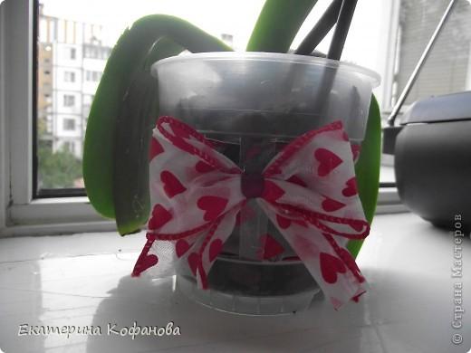 """Мне давно приглянулся цветок - орхидея. На данный момент их очень легко купить и уход за ними не составляет особых усилий, но каждый у кого есть орхидея знает об ее не очень красивой стороне - пластиковый горшок. Красота и стойкость этого цветка поражают , но """"прострелянный """" горшок портит вид. В магазинах продают красивые стеклянные горшки, некоторые выращивают орхидеи в них, но у меня как - то не сложилось со стеклом. От туда плохо испаряется влага и корни гниют. Негативный опыт вернул меня к пластику. фото 8"""