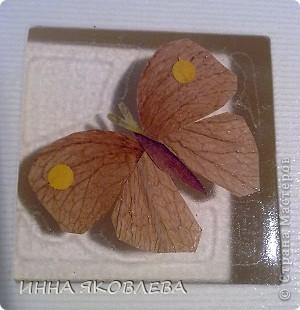 Мастер-класс по изготовлению открыток из засушенных растений в технике лами-арт см.     http://stranamasterov.ru/node/393933  фото 3