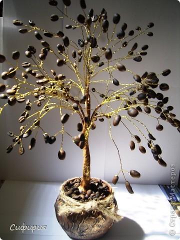 Всем привет!!! Надеюсь я вам еще не надоела! Сегодня я к вам с кофейным деревом! Совсем недавно одна наша мастерица выкладывала деревце (я ее наконец-то нашла) вот здесь ее деревце http://stranamasterov.ru/node/380517 ,я у нее слямзила идею с замачиванием кофейных зерен , и вот засело у меня в голове желание сделать и себе и вот пару недель и вуаля!!! Кстати подобное дерево нашла у Ольги RODI http://stranamasterov.ru/node/311731?c=favorite и вот еще деревце http://stranamasterov.ru/node/366149 фото 1
