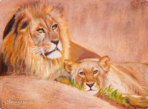 Львы. Семья. фото 2