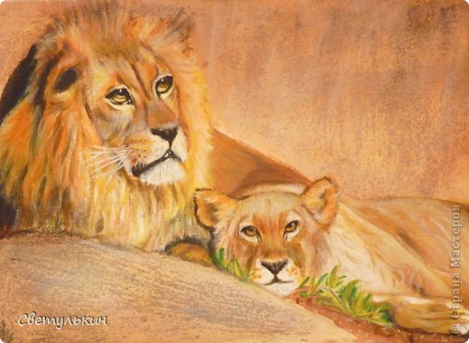 Львы. Семья. фото 1