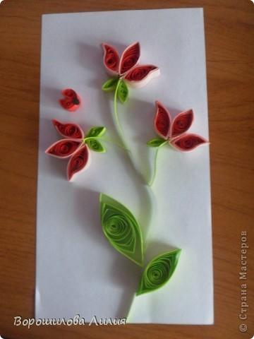 Вот и цветочки! фото 1