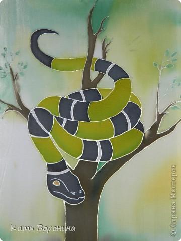 змея и кот фото 1