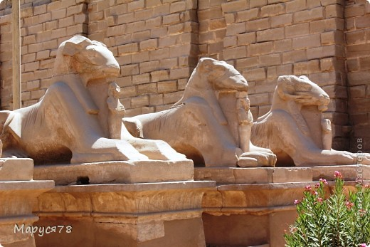 Здравствуйте Жители Страны! Случилось в этом году мне попасть в Египет. Почему случилось???? Потому что не собиралась  ни куда....Надеюсь что не утомлю Вас своим рассказом и фотографиями! И того и другого ОООООООЧЕНЬ МНОГО! фото 5