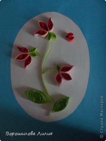 Первые мои розы фото 4
