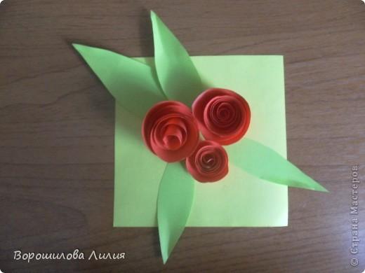 Первые мои розы фото 1