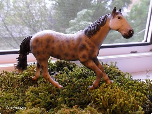 Вот три моих красавца жеребца на прогулке)) Коричневый: Исландский пони. Серый - Андалузкий жеребец) И белый: похож на Липизанскую лошадь. )) Не сказано было, так что утверждать не могу) фото 17