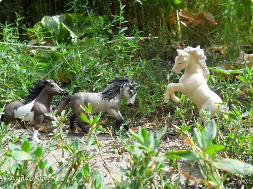 Вот три моих красавца жеребца на прогулке)) Коричневый: Исландский пони. Серый - Андалузкий жеребец) И белый: похож на Липизанскую лошадь. )) Не сказано было, так что утверждать не могу) фото 1
