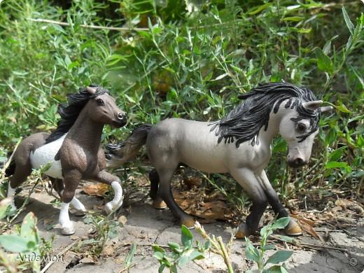 Вот три моих красавца жеребца на прогулке)) Коричневый: Исландский пони. Серый - Андалузкий жеребец) И белый: похож на Липизанскую лошадь. )) Не сказано было, так что утверждать не могу) фото 2
