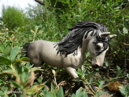 Вот три моих красавца жеребца на прогулке)) Коричневый: Исландский пони. Серый - Андалузкий жеребец) И белый: похож на Липизанскую лошадь. )) Не сказано было, так что утверждать не могу) фото 5