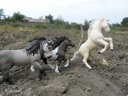 Вот три моих красавца жеребца на прогулке)) Коричневый: Исландский пони. Серый - Андалузкий жеребец) И белый: похож на Липизанскую лошадь. )) Не сказано было, так что утверждать не могу) фото 8