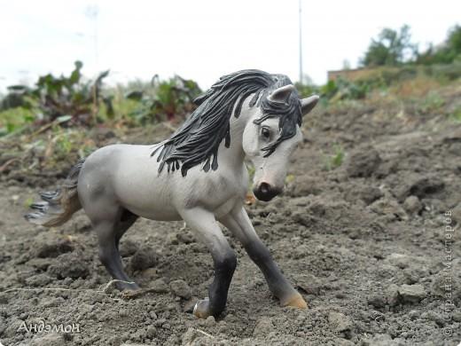 Вот три моих красавца жеребца на прогулке)) Коричневый: Исландский пони. Серый - Андалузкий жеребец) И белый: похож на Липизанскую лошадь. )) Не сказано было, так что утверждать не могу) фото 9