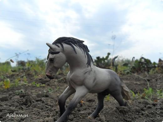 Вот три моих красавца жеребца на прогулке)) Коричневый: Исландский пони. Серый - Андалузкий жеребец) И белый: похож на Липизанскую лошадь. )) Не сказано было, так что утверждать не могу) фото 10