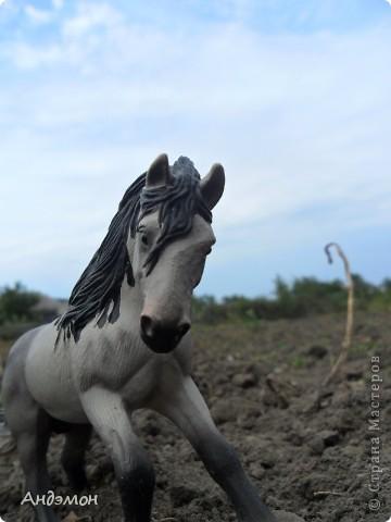 Вот три моих красавца жеребца на прогулке)) Коричневый: Исландский пони. Серый - Андалузкий жеребец) И белый: похож на Липизанскую лошадь. )) Не сказано было, так что утверждать не могу) фото 11