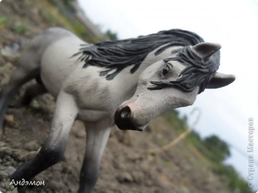 Вот три моих красавца жеребца на прогулке)) Коричневый: Исландский пони. Серый - Андалузкий жеребец) И белый: похож на Липизанскую лошадь. )) Не сказано было, так что утверждать не могу) фото 12